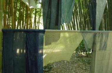 Les plantes tinctoriales à la bambouseraie des Cévennes